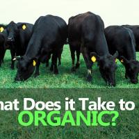 Organic Livestock Nutrition – Feeding, Health & Nutrition of Organic Farms