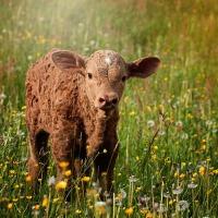 Organic Livestock Farming & Feed Solutions