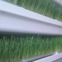 Microgreens – Evolution in Livestock Nutrition for our Possible Existence