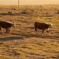 DIY Fodder System – Growing Winter Fodder for Livestock