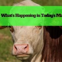Beef – What's Happening in Today's Market?