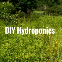 DIY Hydroponics – Grow your own Sustainable Livestock Feed