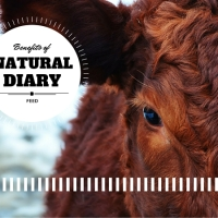 Benefits Of Natural Dairy Feed Without Herbicides