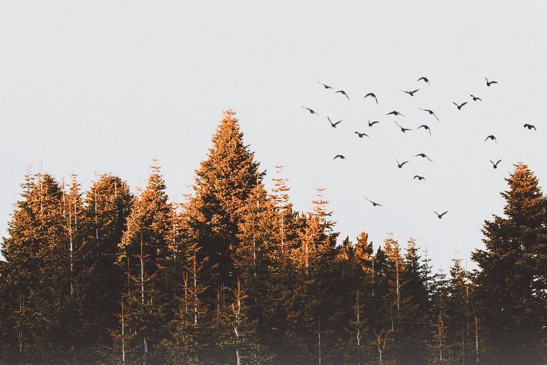 true north woods