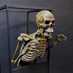 Animations_Skeleton