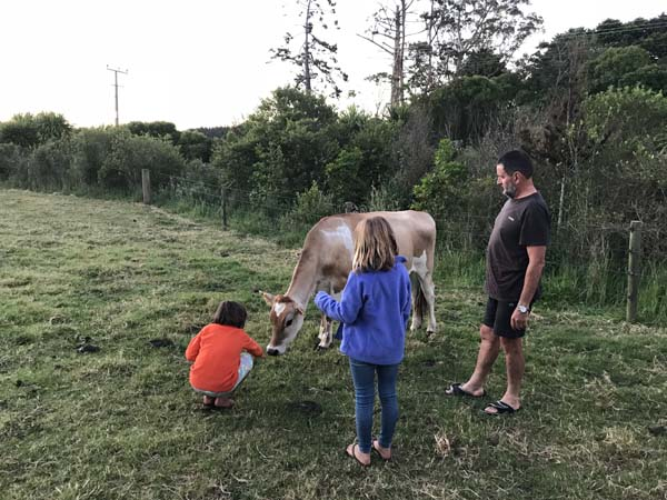 Meeting the cows at the Gray's house.