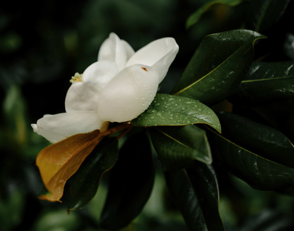 Flowering Garden Nashville Venue