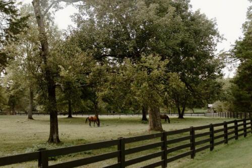 Belle Meade wedding plantation site