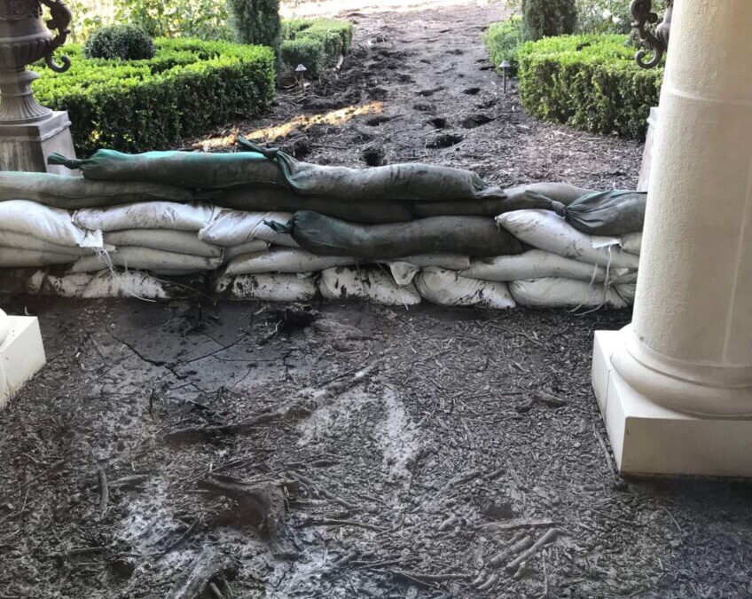 Recovery of Water Damaged Collections
