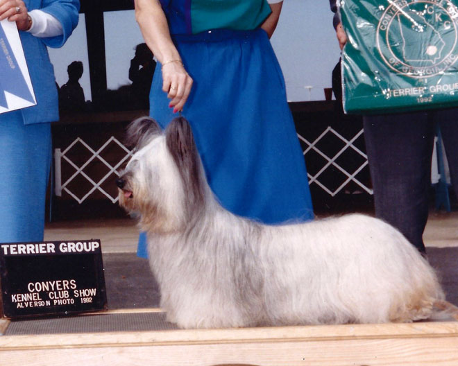 Ch Gold Coast Kandy Kiss – Kandy wins the Terrier Group!