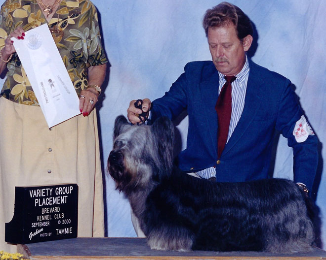 Ch Gold Coast Dutch Boy In the Paint #1 – Dutch getting Best of Opposite Sex at a Skye Terrier Club of America Specialty Show.