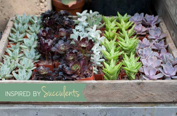 Inspired by Succulents: The Photo Edition