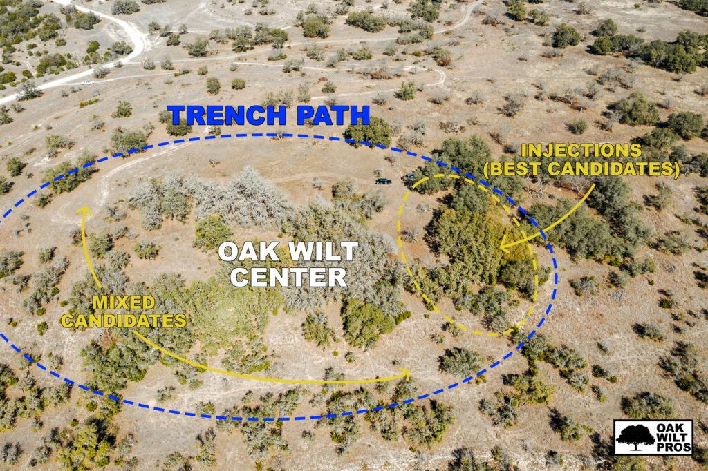 Why Inspect for Oak Wilt?