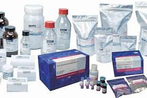 Biotin labeling