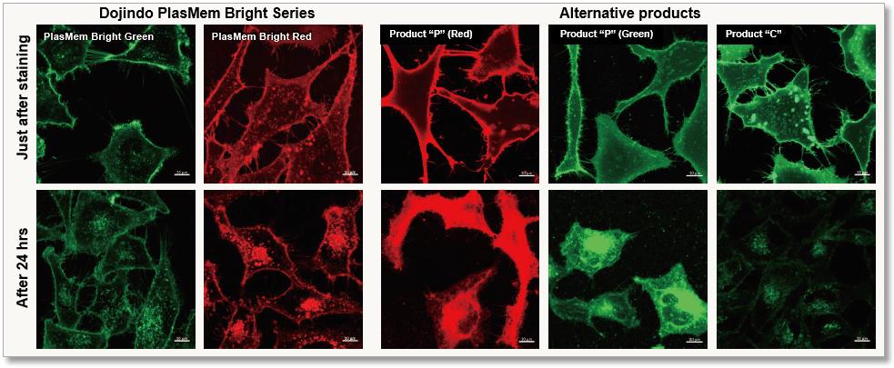 PlasMem Bright series had higher retentivity on plasma membrane than other products