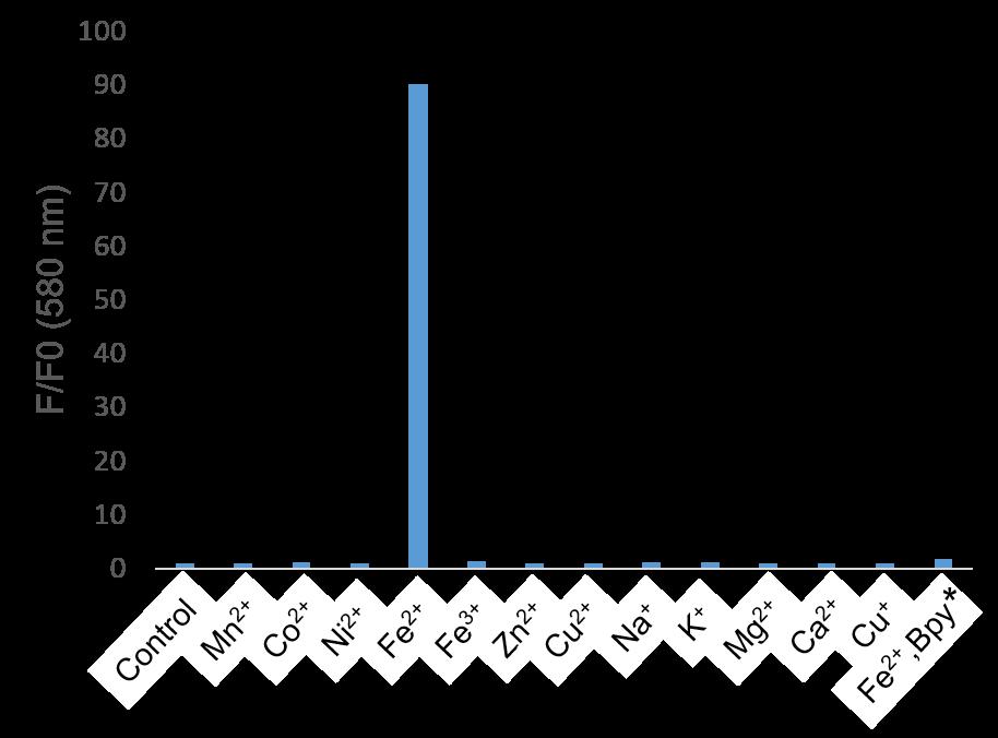 Metal Ion Selectivity
