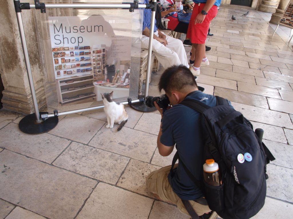Tourist taking a photo of a stray cat in Dubrovnik, Croatia