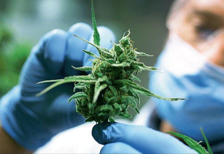 filtros de aire para cannabis