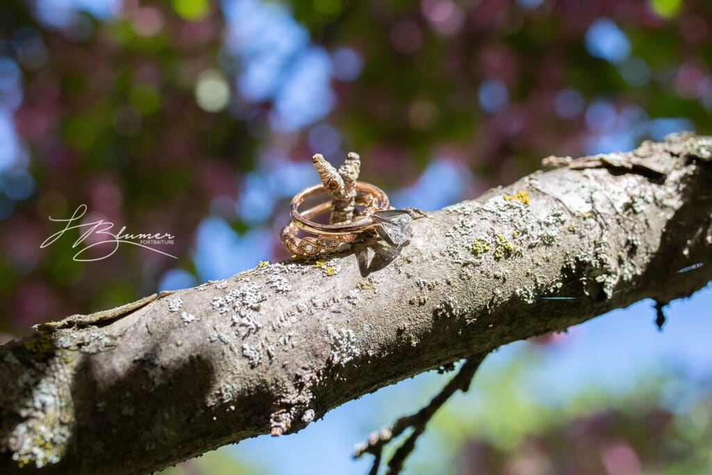 Two wedding rings are suspended in a tree.