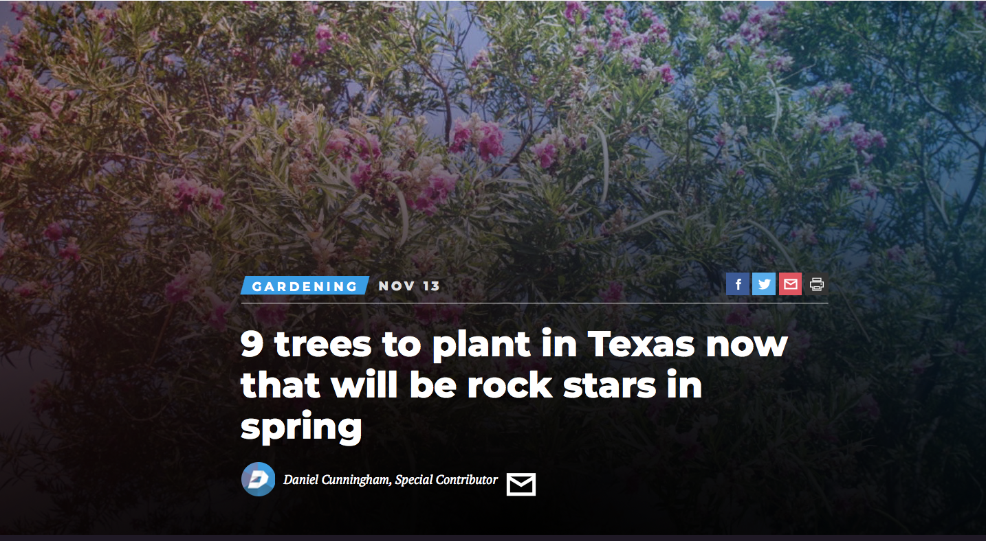 Best trees for spring