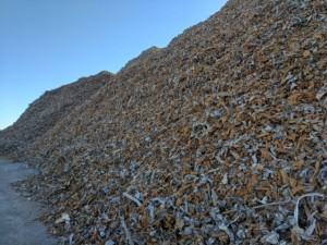 Salisbury Scrap Piles