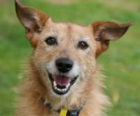 photopage-Happy Dog 2