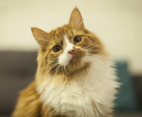 photopage-cat 6