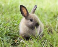 photopage-rabbit