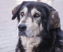photopage-senior dog 4