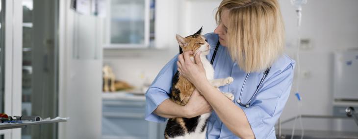 Women holding a cat