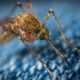 istanbul fights disease carrying mosquitoes using a smartphone app