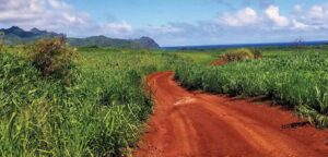Kauai Red Dirt