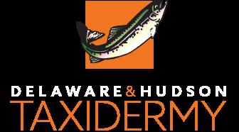 Delaware & Hudson Taxidermy