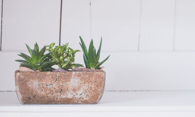 Add Plants to Your Home