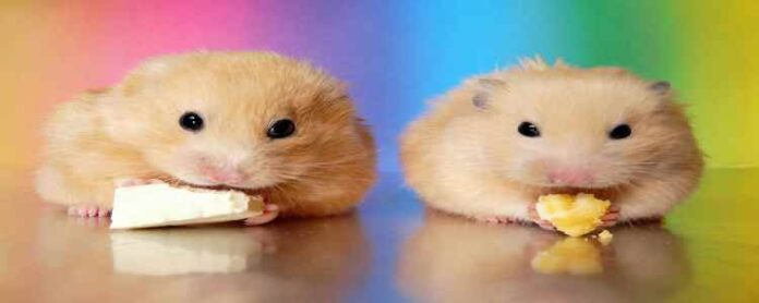 Rainbows and Hamsters