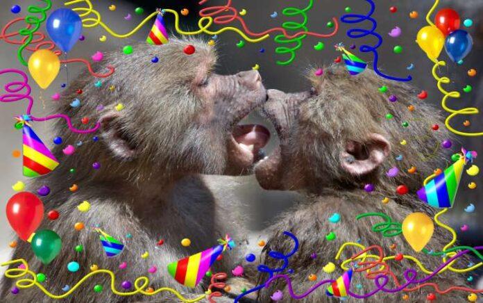 Monkey Meme Contest