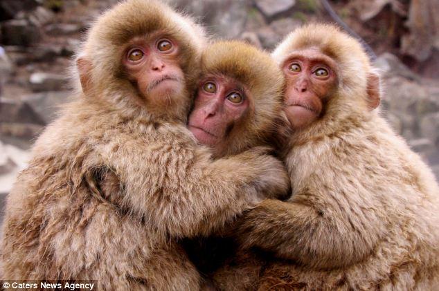 Monkey Photos and Hug