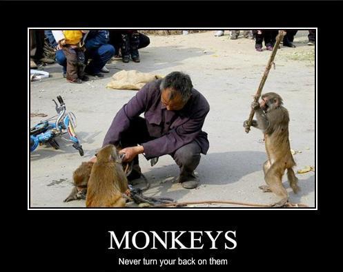 Monkey Photos