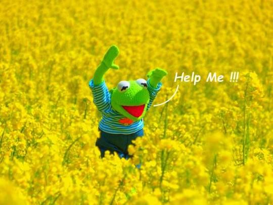 Kermit's yellow oilseed-rape