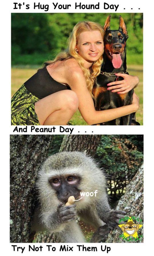 Peanut hound