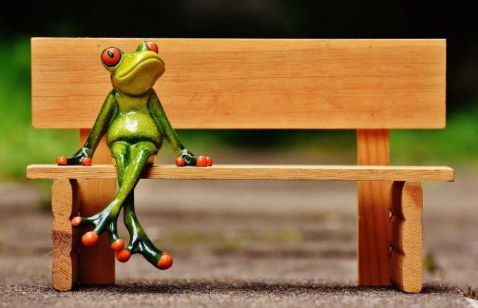 funny jokes, monkey pickles, joke of the day, puns, punny jokes, animal jokes