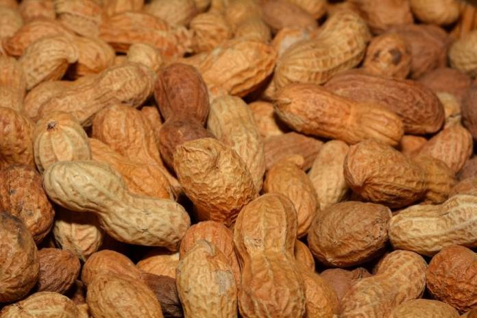 monkey pickles, funny articles, where do peanuts grow