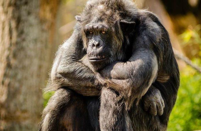 monkey pickles, daily peel, conversation starters