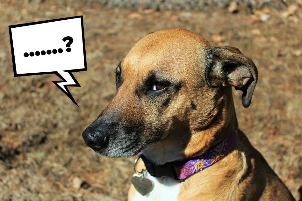 Talking Dog Funny Joke of the Day, Funny Jokes, Dog Jokes, Daily Joke, Daily LOL