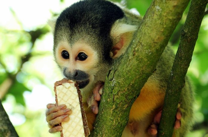 A Guy Walks Into a Bar With His Pet Monkey | Funny Joke of the Day, Monkey Joke, Jokes, Funny Jokes, Walks into a Bar
