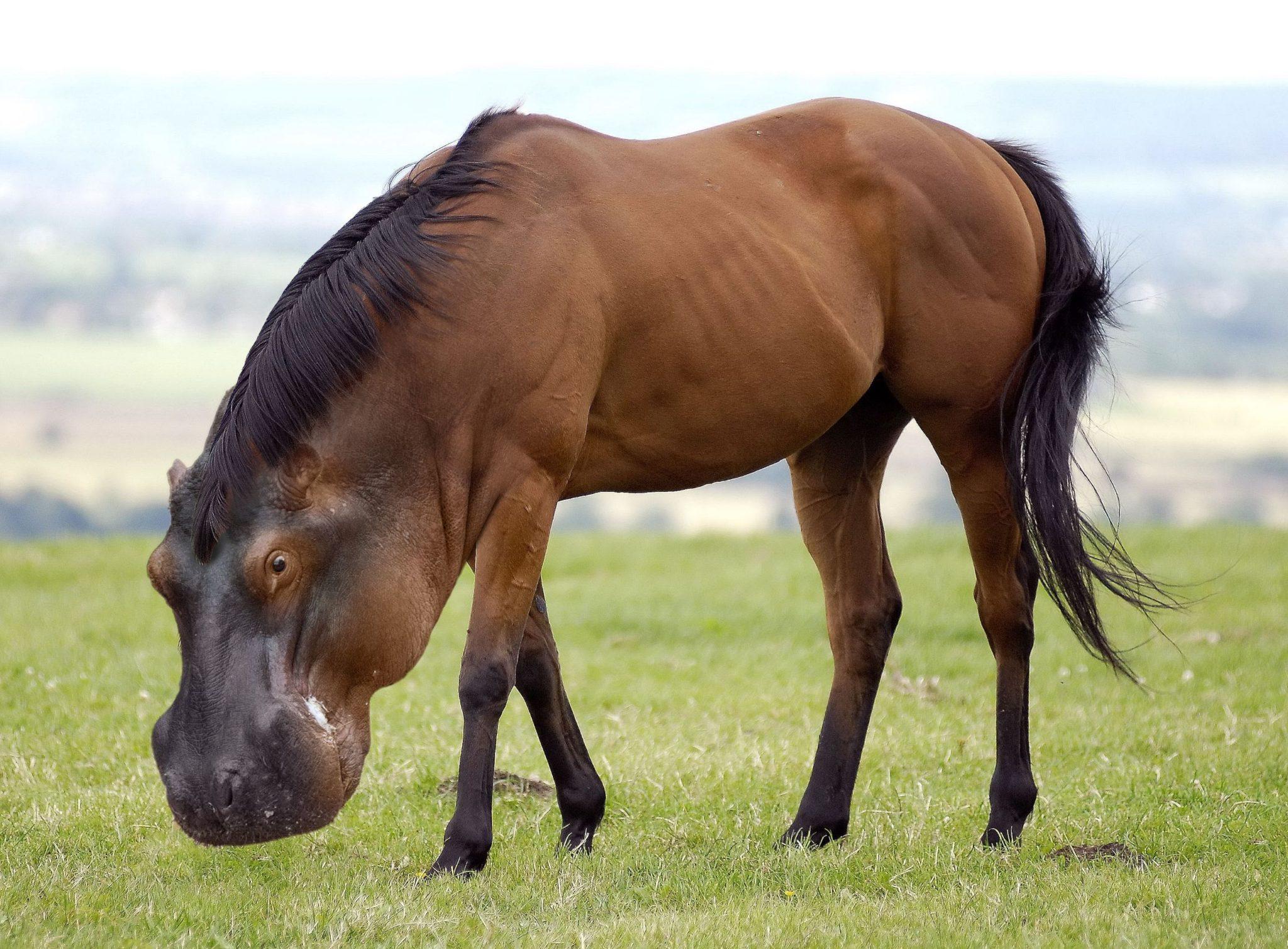 Animal Hybrid, Crossbred, Animal Combinations, Hybridization, Hybrid Species, Combined Animals, Animal Photos