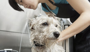 self serve pet wash