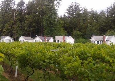 Autumn Mtn Winery