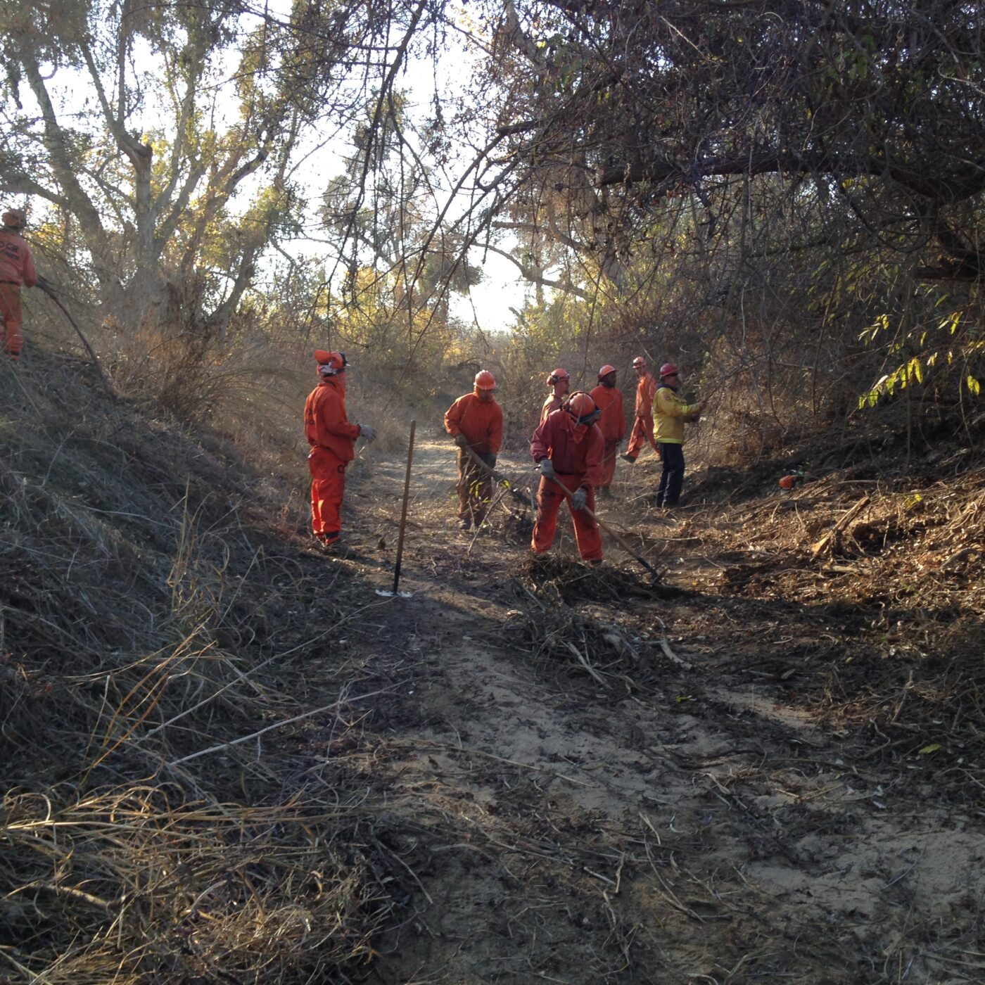 CalFIRE crew working in Poso Creek to clean up fallen trees and limbs