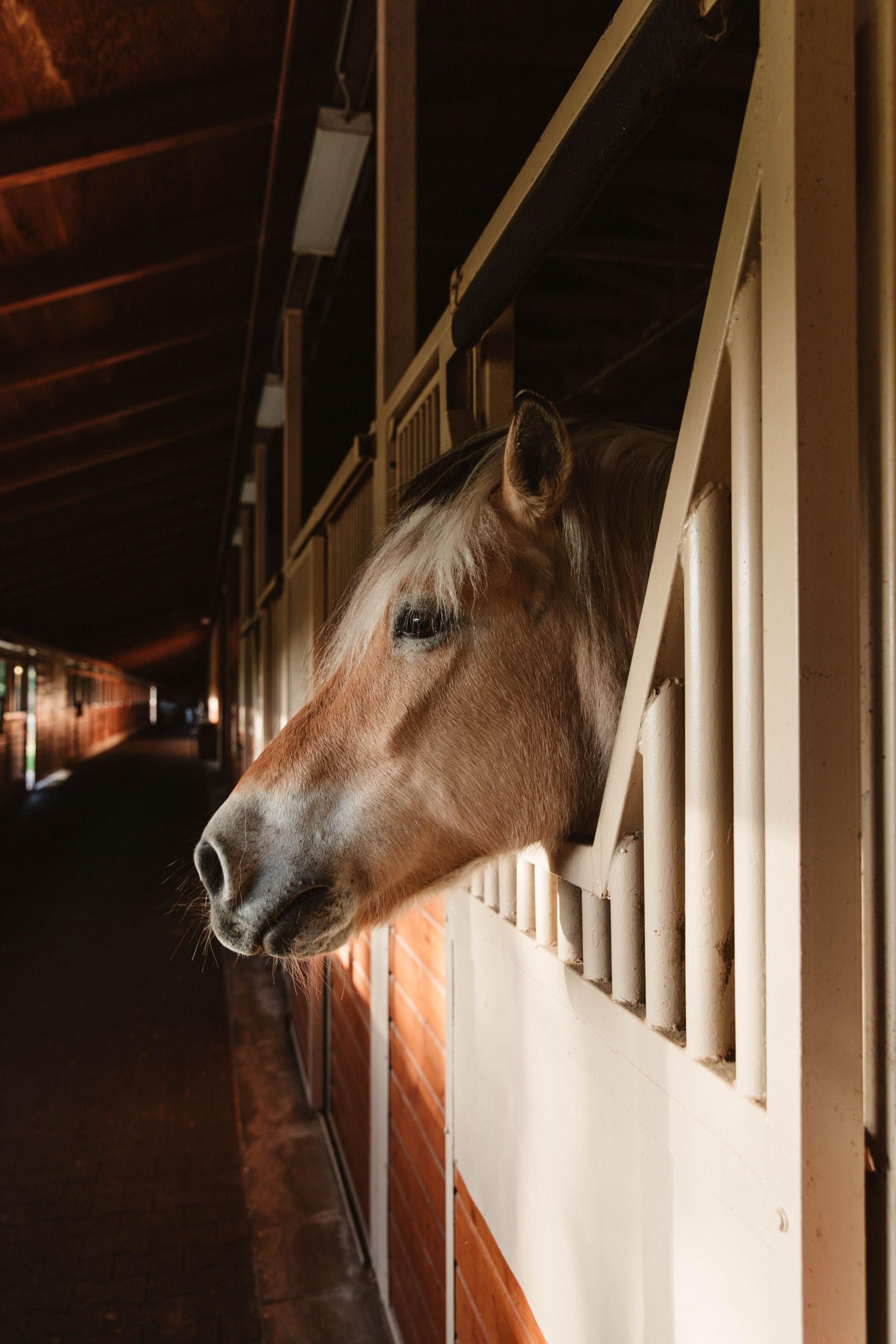 Mizel equestrian center